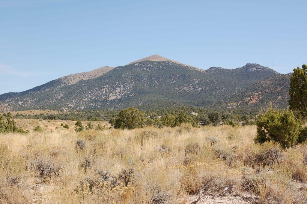 40 Acres Nevada