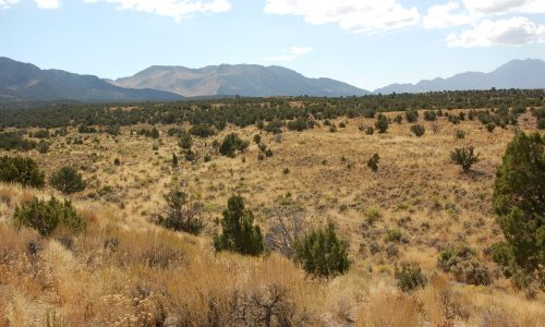 Land for Sale in Montello
